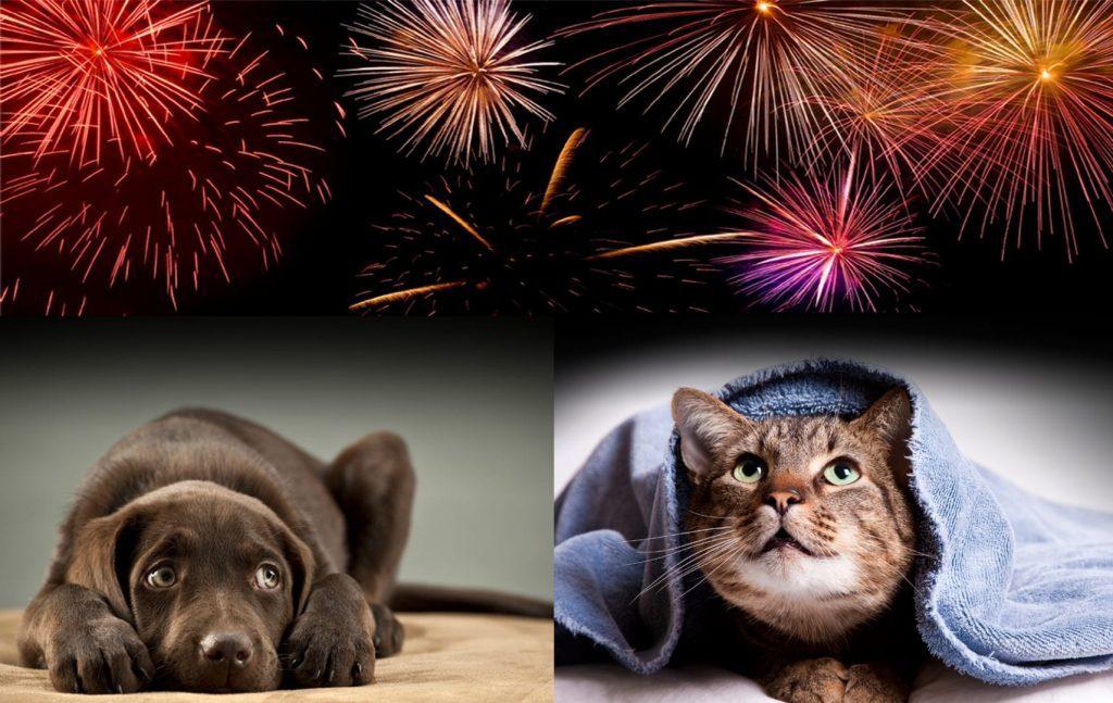 cat-dog-fireworks