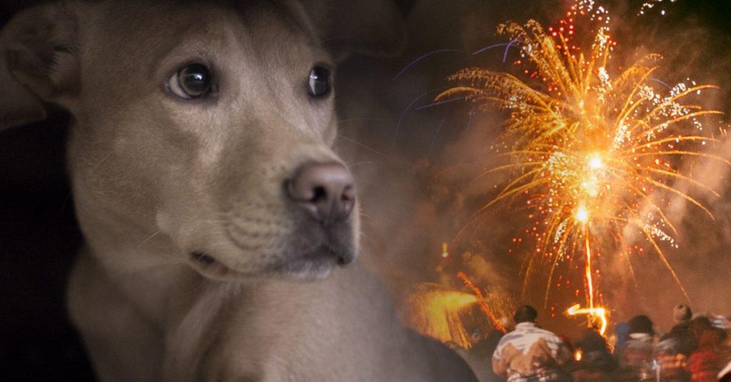 pets-fireworks