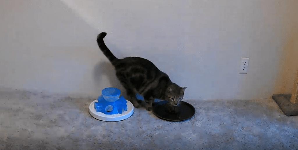 contrafreeloading cat1