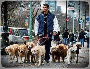Vyigul-sobak-kiev-Dog-walking